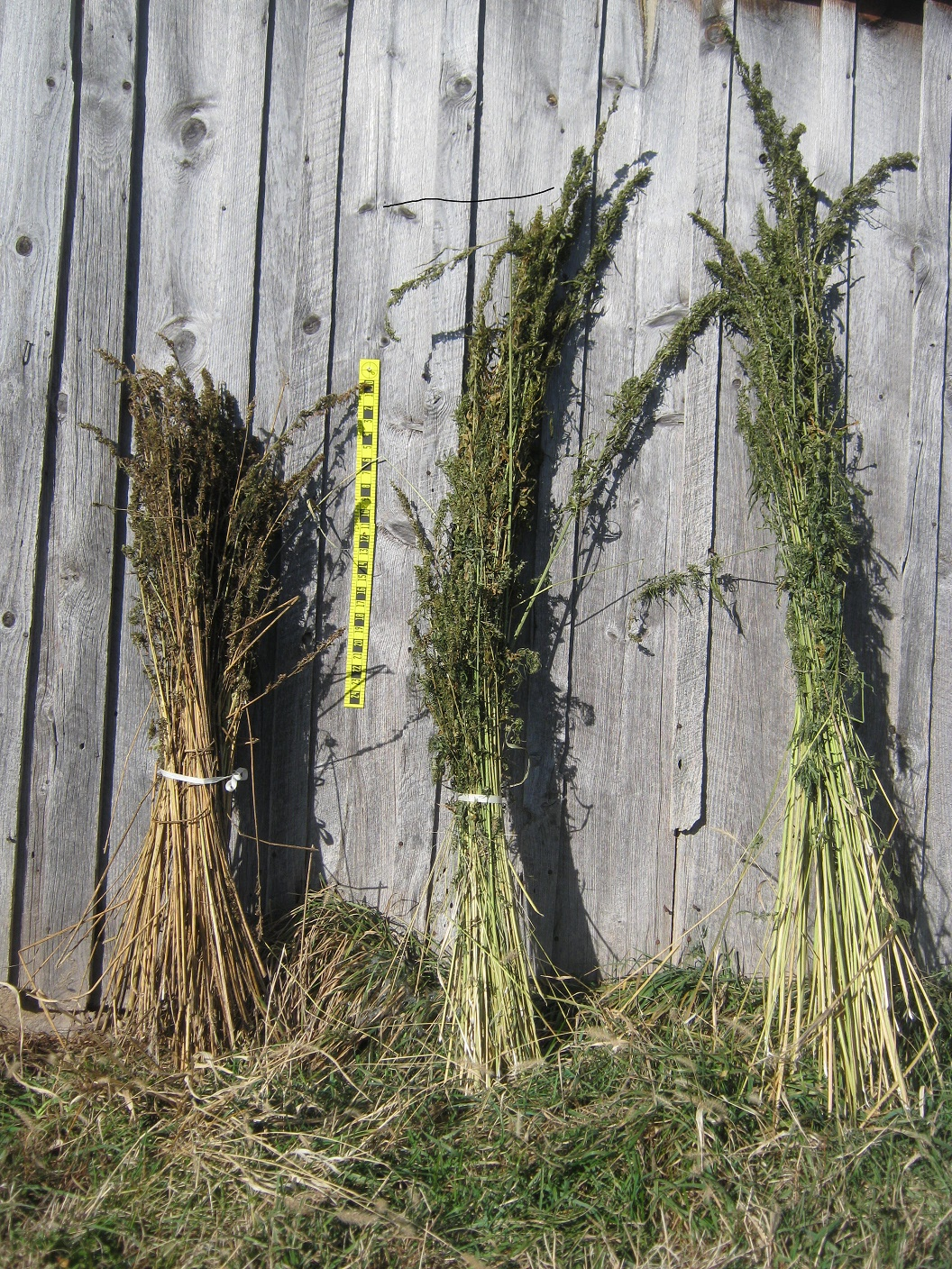 hemp bundles1